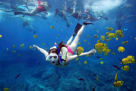 Hawaii Snorkel Adventures