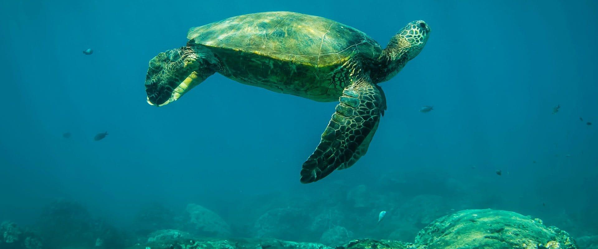 Beauty of sea turtles underwater