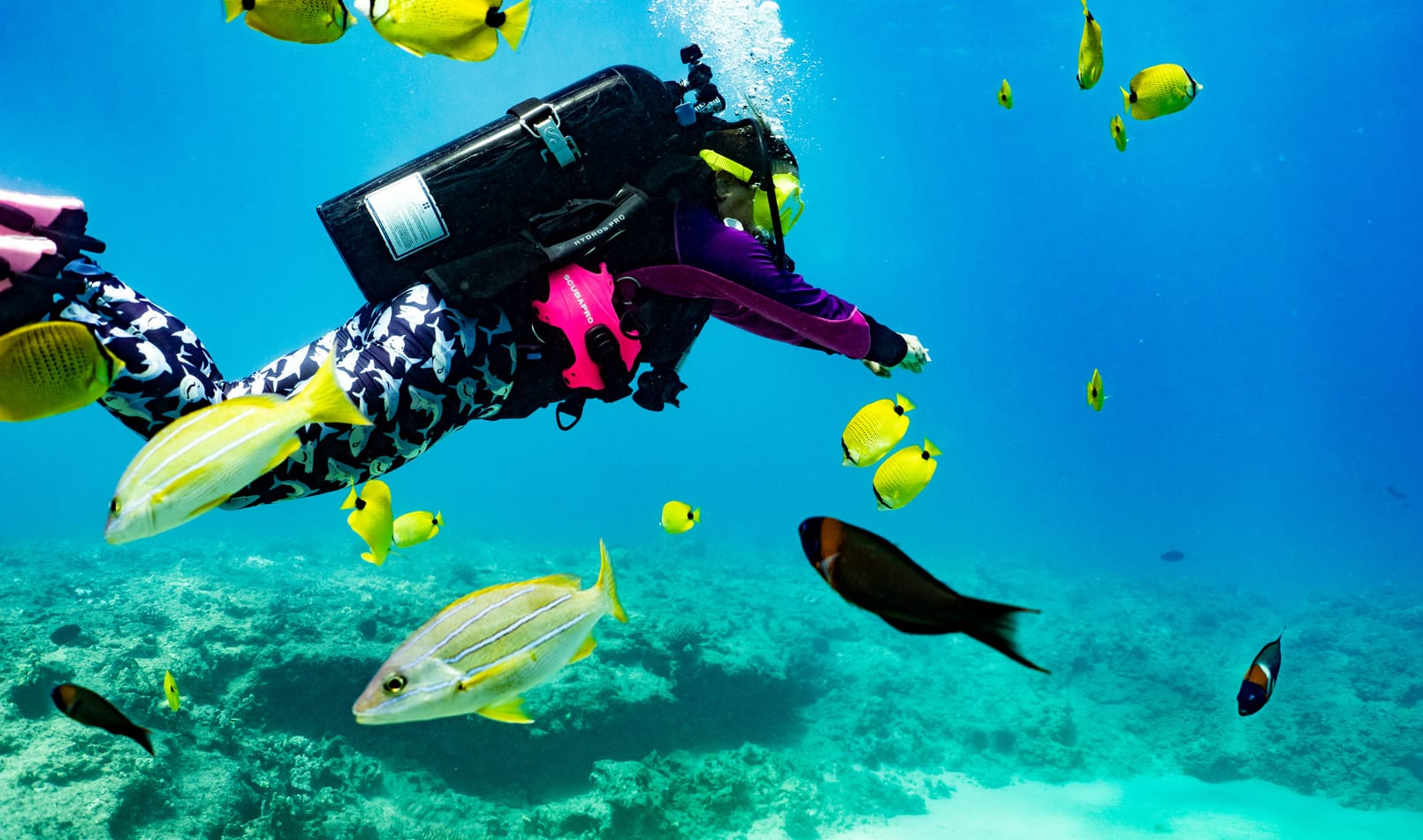 Go Scuba Diving <br />in Oahu, Hawaii